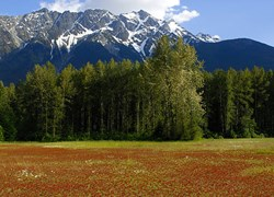 View of Mount Currie from the Pemberton Valley