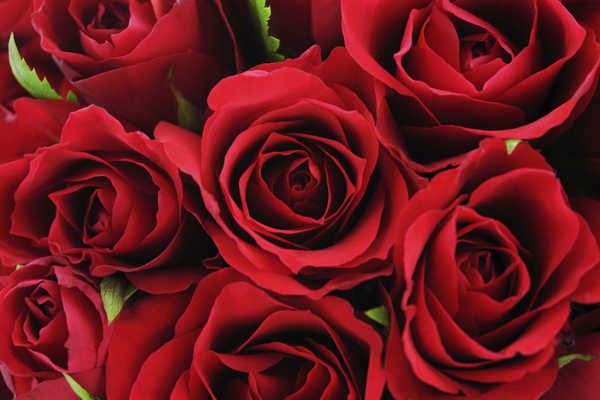 Romance Packages Roses