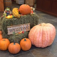 The Great 2015 Pemberton Valley Pumpkin Contest is Back!