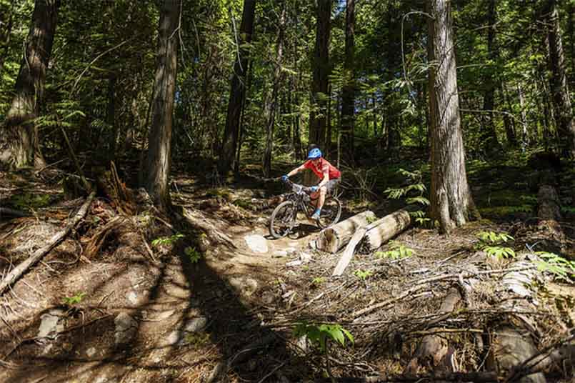 Pemby Mountain Biking - Forest
