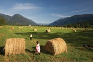 Enjoying a day in the fields of Pemberton Meadows
