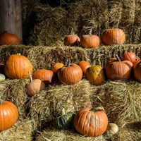 Visit Pemberton's Pumpkin Patches