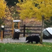 Bear Spotting at the Lodge